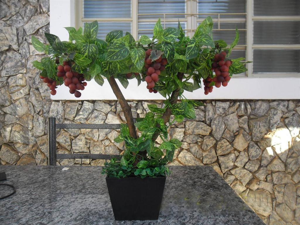 Artigos bonsai for Pianta di vite in vaso
